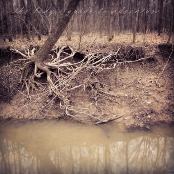 muddy water, creek trees, beautiful roots, southern indiana, outdoors, shed hunting