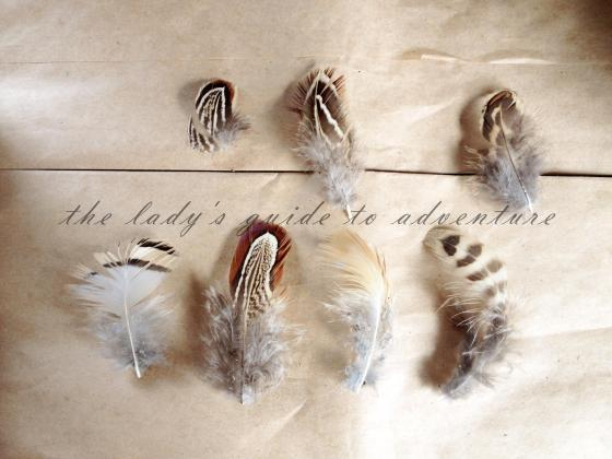 feathers, found outside