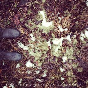 shed hunting, boots in the springtime, in the woods, hiking, looking for antler, moss, nature, wildlife, beauty