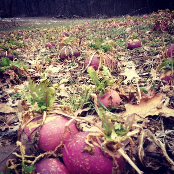 turnip field, southern indiana, hiking in the woods, homegrown, picking vegetables, shed hunting