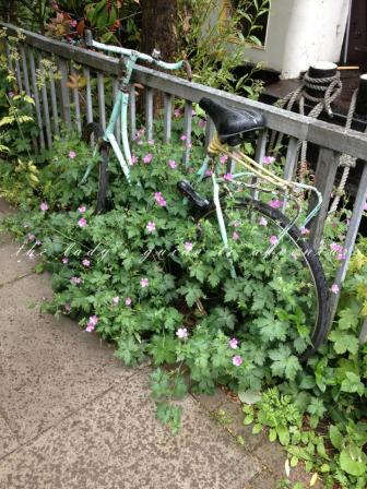 pretty old bicycle, covered in plants