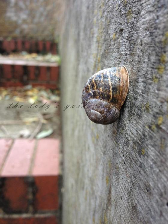 snail in brentford