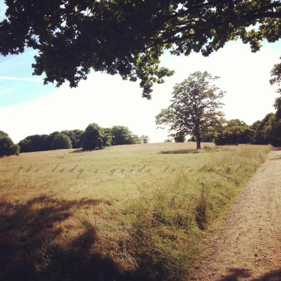 hampstead heath, beautiful, fields of gold