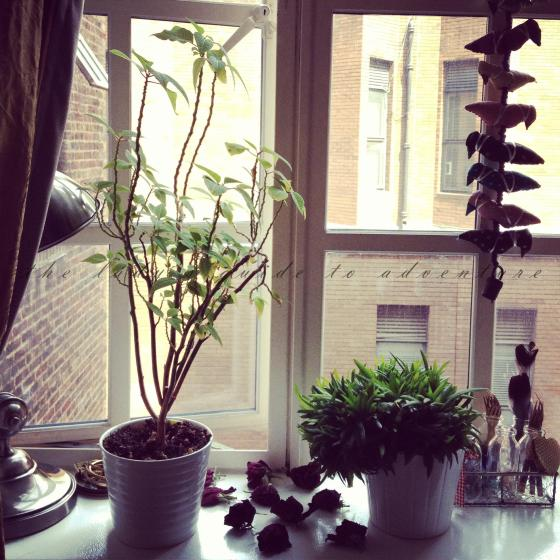 london, plants