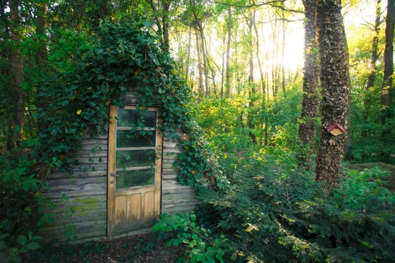 cabin, 1001 gardens, beautifully in touch with the forest, living in nature, simplistic living, cabin in the woods, homemade house, yellow door, perfect lighting