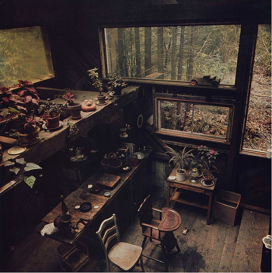 tiny house, homemade house, tiny cabin, lots of succulents, growing plants in old cabin, by the windows, beautiful indoor garden