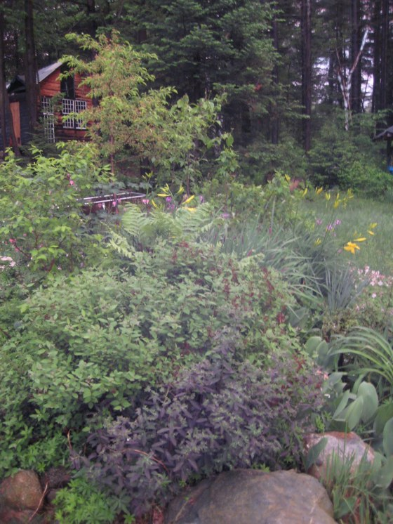 of one's own, wildflowers, garden by the cabin, woodbird,