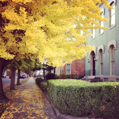 pretty fall colors, leaves are changing, downtown evansville, beautiful historic homes