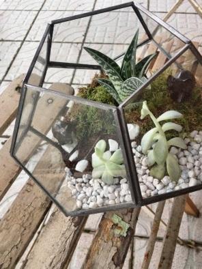 elephant in terrarium, beautiful terrarium, unhappy moss, moss looking good, for now, terrariums galore, plant lady, wet and dry terrarium, big mistake, cactus, succulent, white stones, pretty container