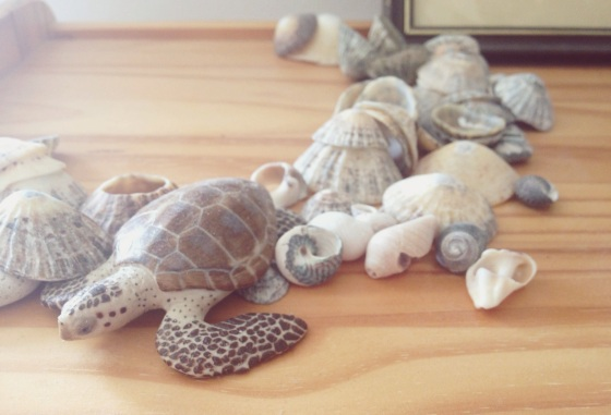 collection of stones, seashells, natural objects, turtle carving, ruta's room, pretty things, just a glimpse