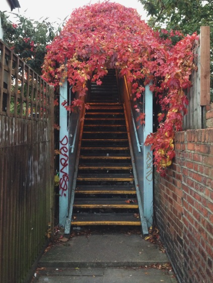finchley road, autumn foliage, autumn in london, northwest london, secret locations, secret tunnels, bring red leafy covering, graffiti, brick walls, exploring europe, a walk around london town, inviting and alluring, red tinted lighting, walk over the train tracks