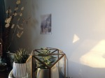 sanctuary, my home, my room, london, berber woman, postcard from morocco, the sunlight, painting the walls in sunlight, plants, cacti, succulents, potted plants, london life, shark teeth, ecstasy